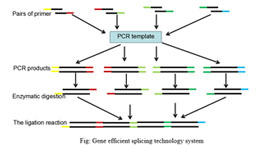 The high efficient technology on gene seamless-splicing