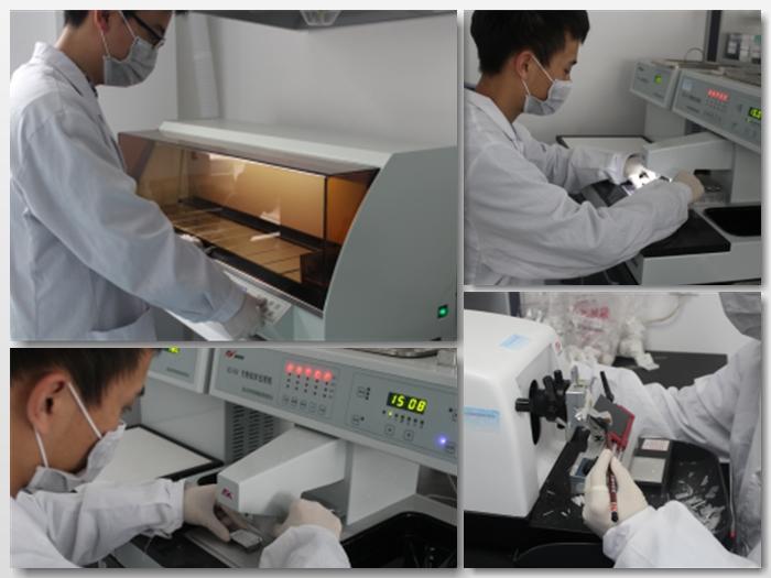 Animal Pathology Experiment