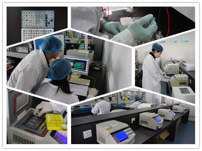 Plasmid Construction / PCR