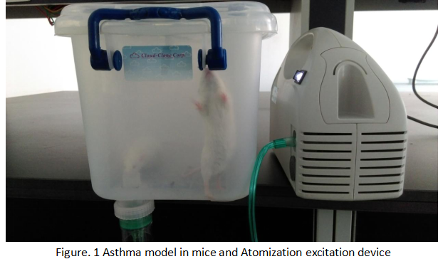 Mouse Model for Asthma