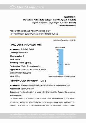 Monoclonal-Antibody-to-Collagen-Type-VIII-Alpha-1--COL8a1--MAC146Rb21.pdf