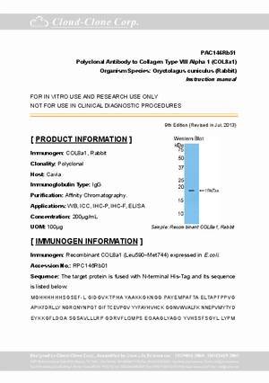 Polyclonal-Antibody-to-Collagen-Type-VIII-Alpha-1--COL8a1--PAC146Rb51.pdf