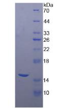 Active Carcinoembryonic Antigen (CEA)