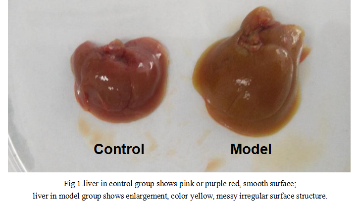 Mouse Model for Intrahepatic Cholestasis (IC)