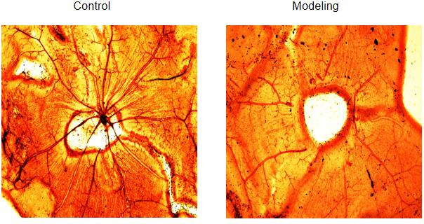 Rat Model for Diabetic Retinopathy (DR)