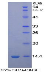 Recombinant Platelet Factor 4 (PF4)