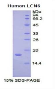 Recombinant Lipocalin 6 (LCN6)
