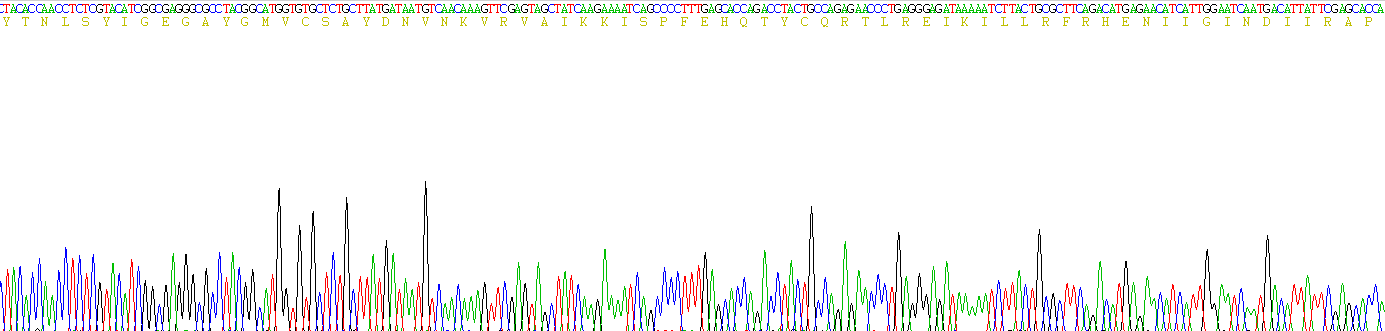 Active Extracellular Signal Regulated Kinase 2 (ERK2)