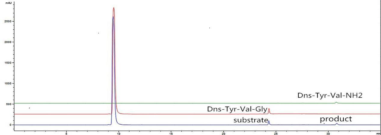 Peptidylglycine alpha-amidating monooxygenase mwa