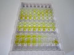ELISA Kit for Proinsulin (PI)