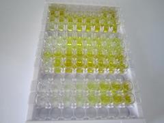 ELISA Kit for Immunoglobulin G (IgG)