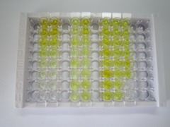 ELISA Kit for Immunoglobulin G (IgG)