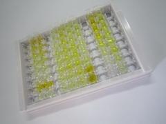 ELISA Kit for Cholecystokinin (CCK)