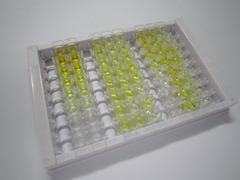 ELISA Kit for Calcitonin Gene Related Peptide (CGRP)