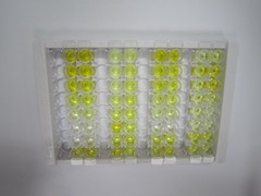 ELISA Kit for Immunoglobulin G2 (IgG2)