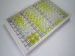 ELISA Kit for Cholecystokinin 18 (CCK18)