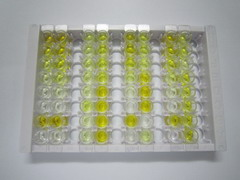 ELISA Kit for Butyric Acid (BA)