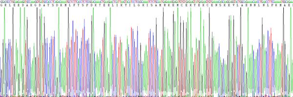 Eukaryotic Interleukin 6 (IL6)