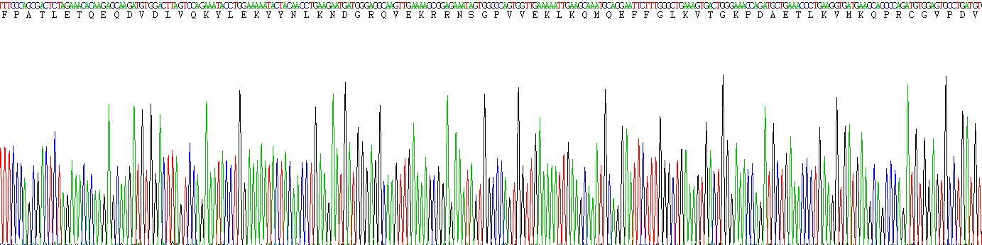 Eukaryotic Matrix Metalloproteinase 1 (MMP1)