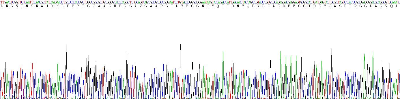 Eukaryotic Dickkopf Related Protein 1 (DKK1)