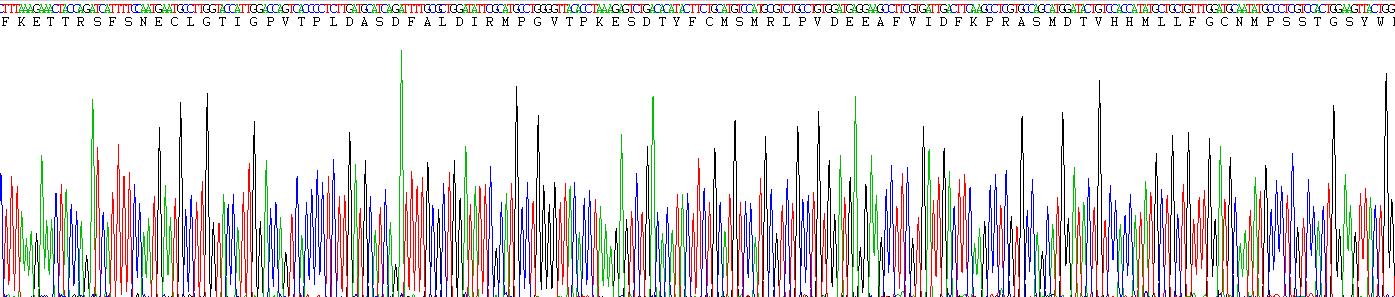 Eukaryotic Peptidylglycine Alpha Amidating Monooxygenase (PAM)