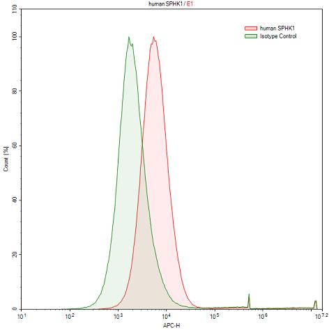 Anti-Sphingosine Kinase 1 (SPHK1) Polyclonal Antibody