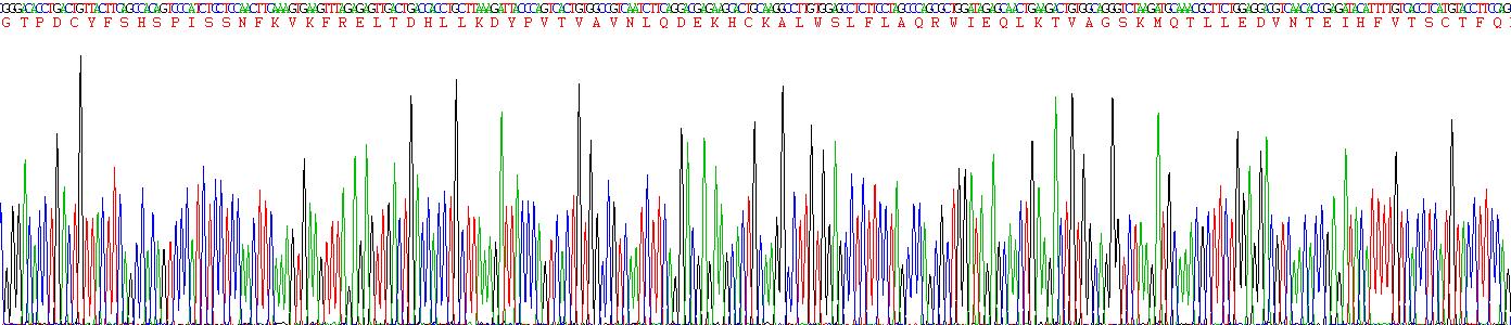 Recombinant FMS Like Tyrosine Kinase 3 Ligand (Flt3L)