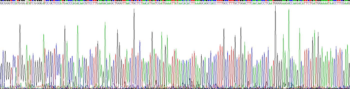 Recombinant Interleukin 3 (IL3)