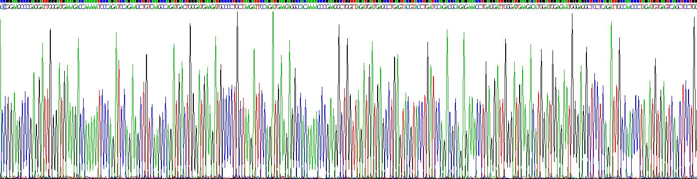 Recombinant Calnexin (CNX)