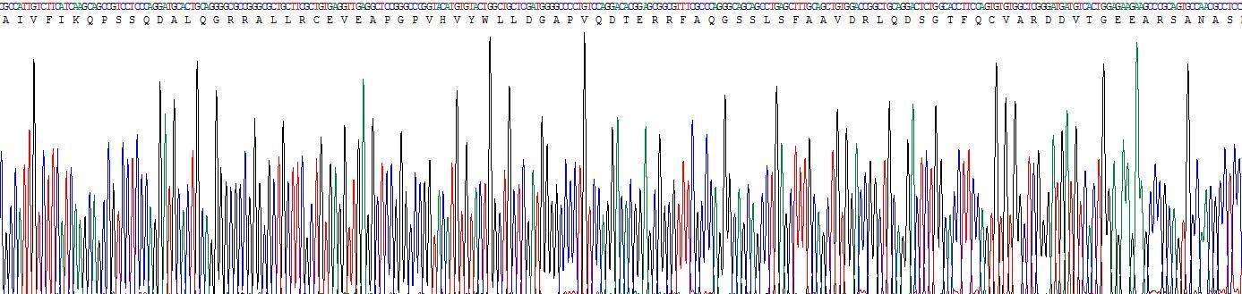 Recombinant Cholecystokinin 4, Tetrapeptide (CCK4)