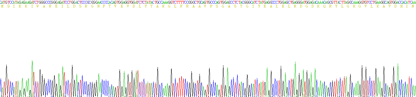 Recombinant Enolase, Neuron Specific (NSE)