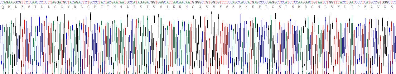 Recombinant Dopamine Receptor D1 (DRD1)