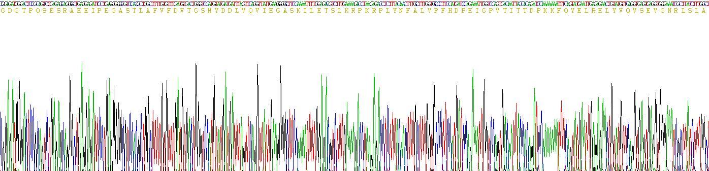 Recombinant Hemicentin 1 (HMCN1)
