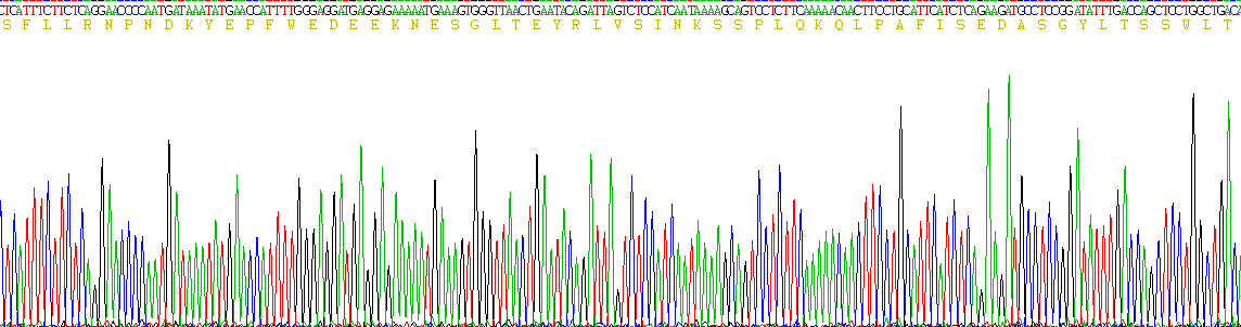 Recombinant Protease Activated Receptor 1 (PAR1)