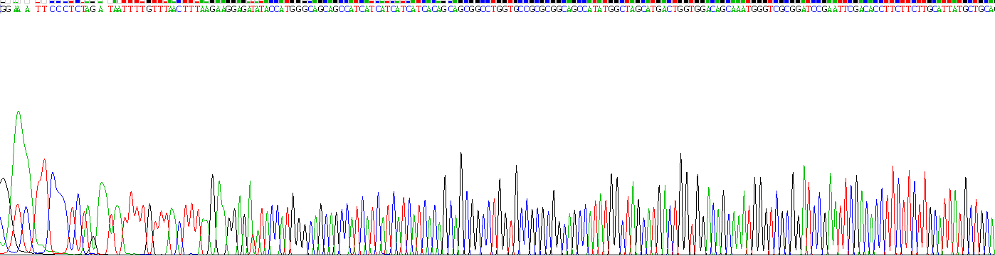 Recombinant Transient Receptor Potential Cation Channel Subfamily A, Member 1 (TRPA1)