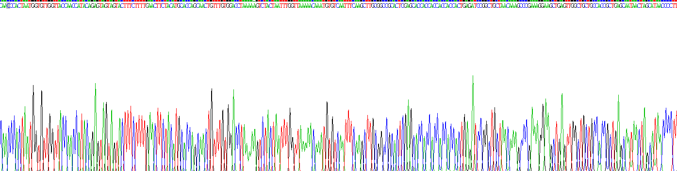 Recombinant Spike Protein (SP)
