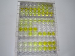 ELISA Kit for Factor Related Apoptosis (FAS)