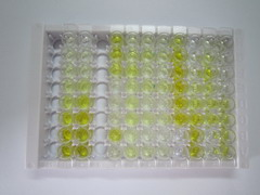 ELISA Kit for Glycoprotein 130 (gp130)