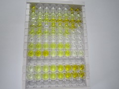 ELISA Kit for Insulin Like Growth Factor Binding Protein 3 (IGFBP3)