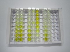 ELISA Kit for Tumor Necrosis Factor Alpha (TNFa)