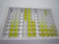 ELISA Kit for Intercellular Adhesion Molecule 1 (ICAM1)