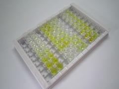 ELISA Kit for Insulin Degrading Enzyme (IDE)