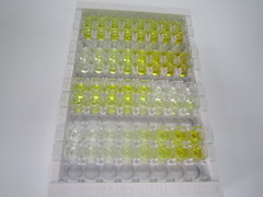 ELISA Kit for Growth Differentiation Factor 3 (GDF3)