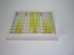 ELISA Kit for Matrin 3 (MATR3)