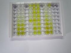ELISA Kit for Guanylate Cyclase 1 Beta 3 (GUCY1b3)
