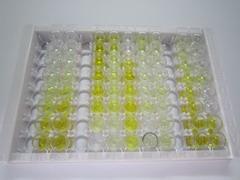 ELISA Kit for DNA Methyltransferase 1 (DNMT1)