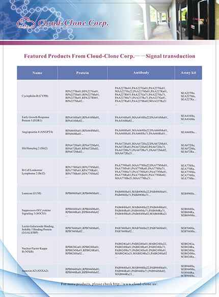 Featured Productes From Cloud-Clone Corp. -- Signal transduction