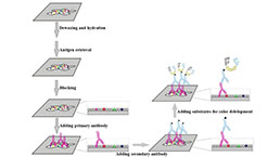 Immunohistochemistry (IHC) Experiment Service