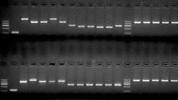 Cloning/PCR