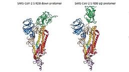 Spike RBD Protein (S-RBD)